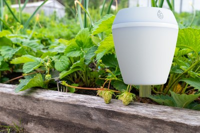 iCroft SENS POD in a backyard raisebed helping grow strawberries.