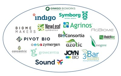 """The start-up landscape for the plant microbiome is growing rapidly. Source: IDTechEx report """"Biostimulants and Biopesticides 2021-2031: Technologies, Markets and Forecasts"""", www.IDTechEx.com/AgBio. Each company shown in this graph is profiled in the report (PRNewsfoto/IDTechEx)"""